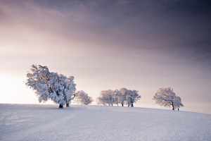 Wandbild Winter Trees