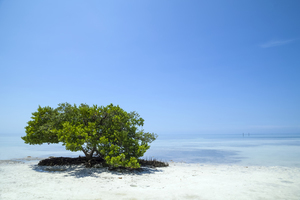 Wandbild FLORIDA KEYS Lonely Tree