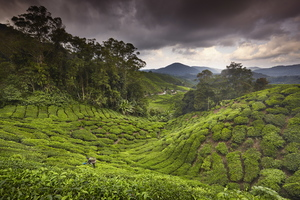 Wandbild Taylor Richard - Cameron Highlands