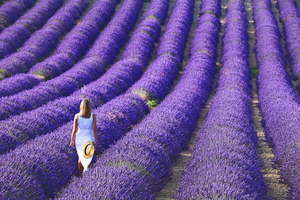 Wandbild Vaccarella Luigi - Young girl in the lavender fields