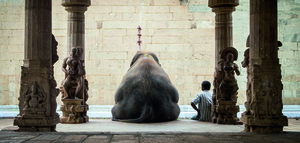 Wandbild The elephant and his Mahot by Ruhan
