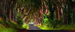 Wandbild Dark Hedges by Olimpio Fantuz, Huber Images