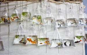 Wandbild The Wall of Fish by Monadl MONOJIT, 1x.com