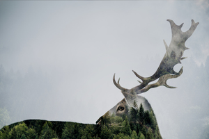 Wandbild Antler Double-exposed by Beata Angyalosi