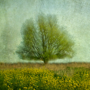 Wandbild In the yellow field by Jacqueline van Bijnen,1x.com