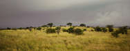 Wandbild Serengeti Plains