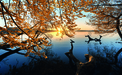 Wandbild Autumn Morning by keller,1x.com