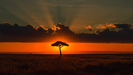 Wandbild Behind the Acacia Tree by Tony Yu, 1x.com